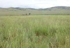 Figure 6: Photo of a wild field of grass, rolling hills in the background