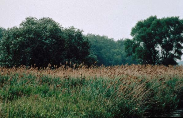 Figure 1: Photo of an overgrown pasture with trees in the distance