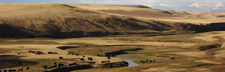 Wide-angle rangeland photo, featuring cattle and a winding river.
