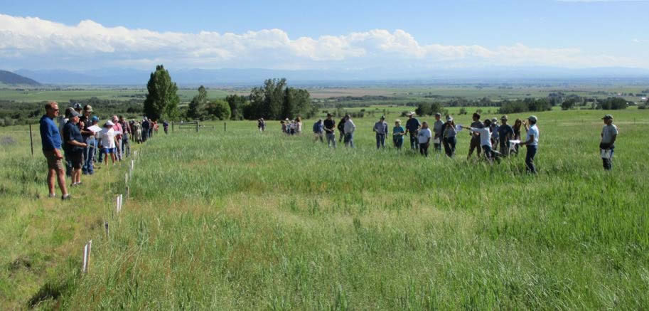 Figure 4: Photo of a large group of people standing in a field