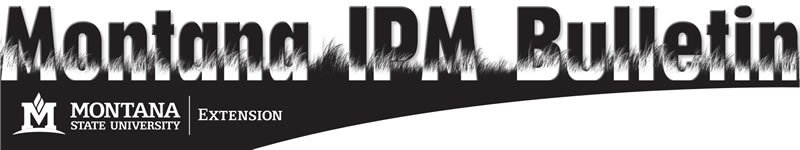 Montana IPM Bulletin banner image, large title letters with grass growing around them